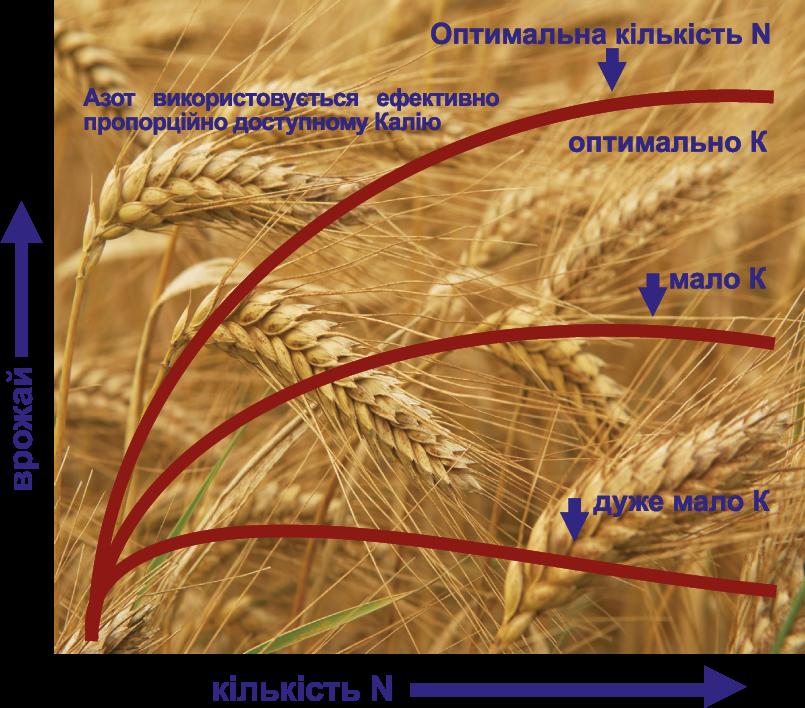 елементи питания растения