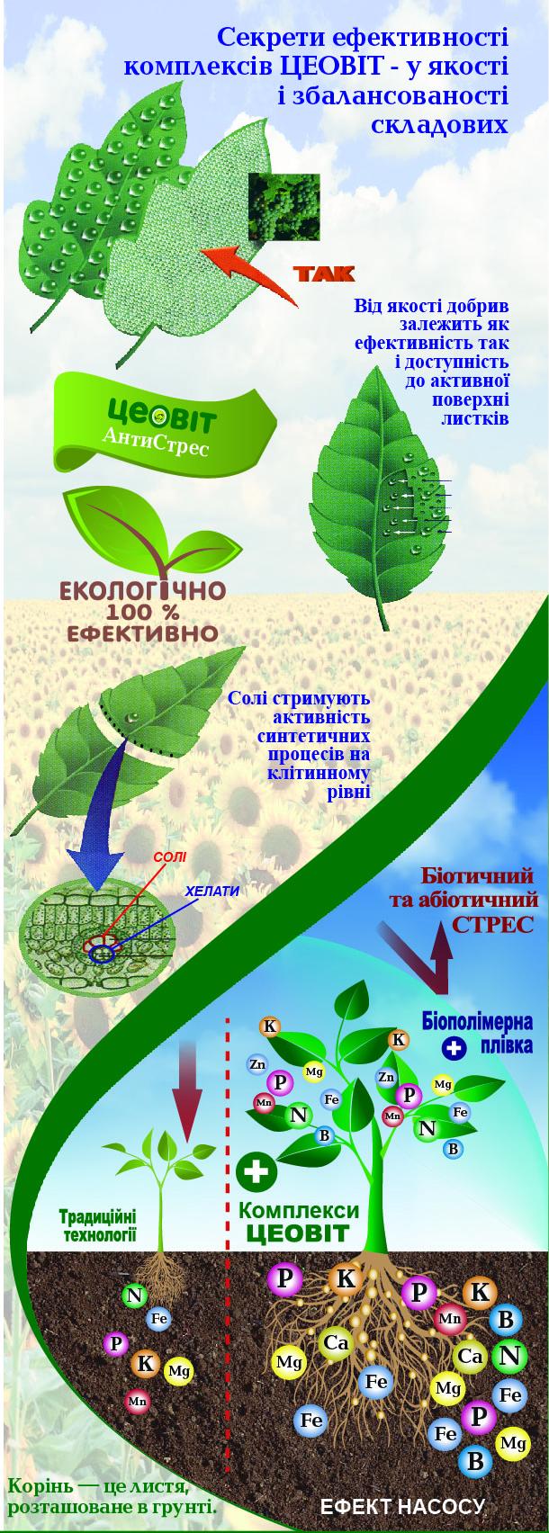 корень это листья расположенные в земле