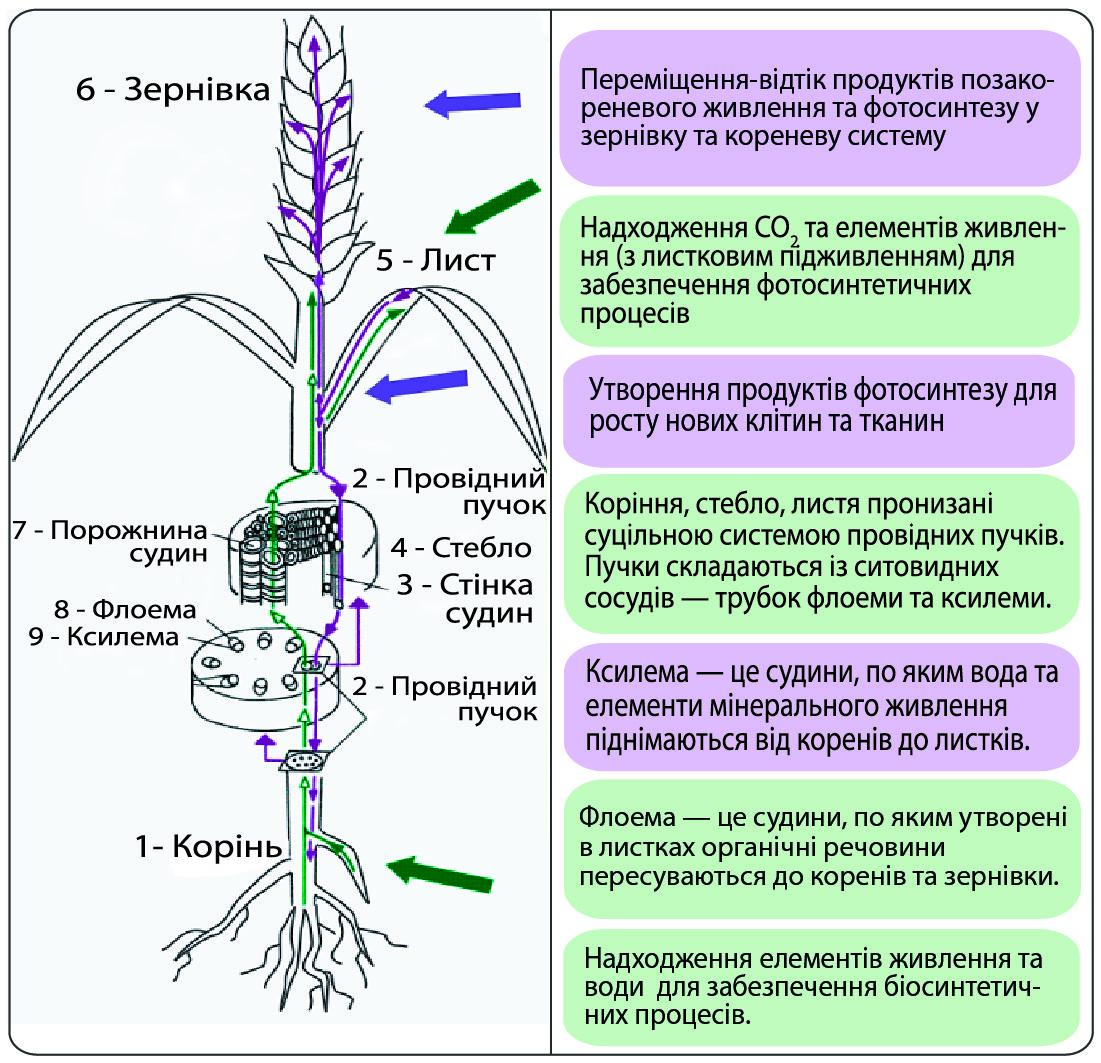 биофабрика листьев и корневой системы