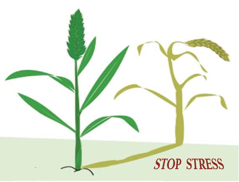Остановить стресс растений